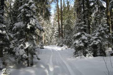 Восхитительные лыжные прогулки по Золотаревскому городищу!