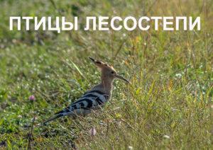 1 апреля 2021 года в 15.00 в Пензенском краеведческом музее состоится открытие фотовыставки «Птицы лесостепи»